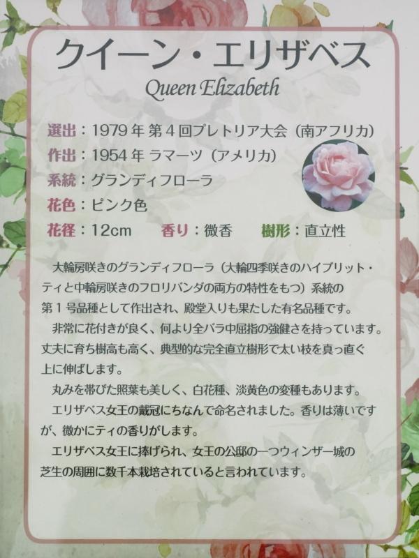 Rosa Queen Elizabeth