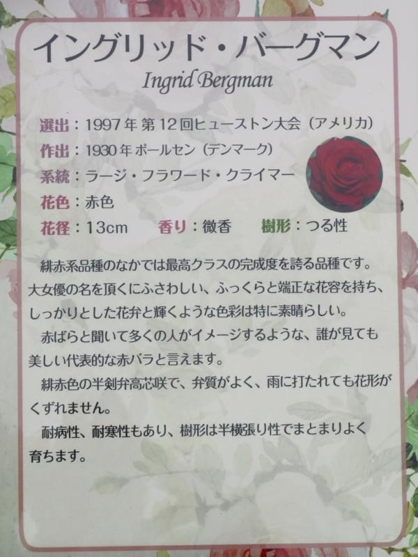 Rosa Ingrid Bergman