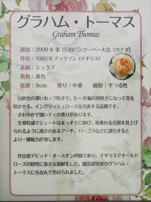 Rosa Graham Tomas
