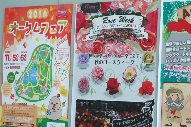 Rose Week 2016