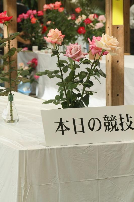 Osaka Rose Exhibition 2016