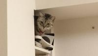 棚の上のネコ