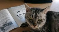 猫とガイドライン