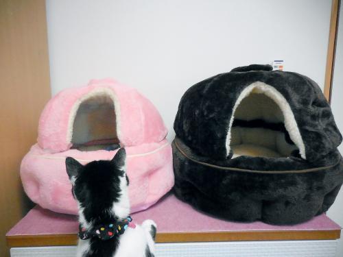猫鍋くぅ点検