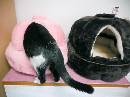 猫鍋くぅ潜る
