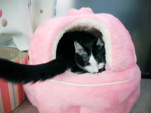 猫鍋くぅ入る