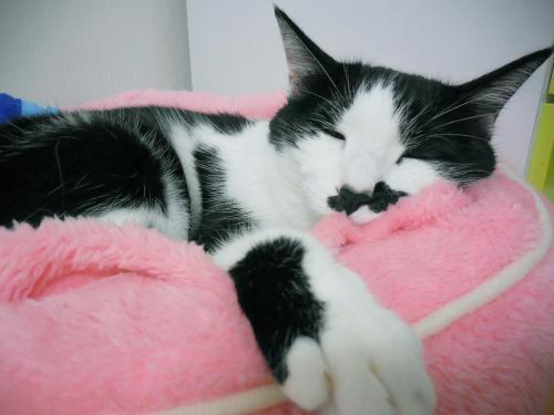 くぅ元気ピンクの寝床