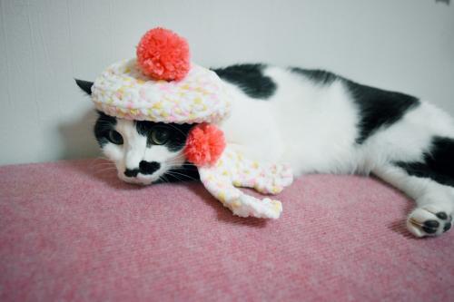 くぅベレー帽寝る