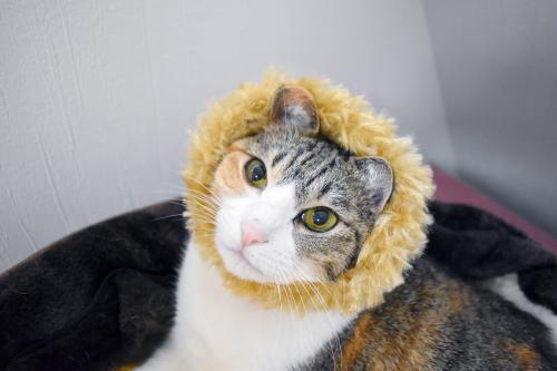 みくライオン