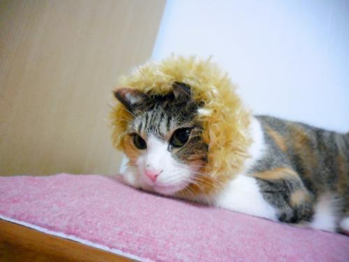 みくライオン寝る
