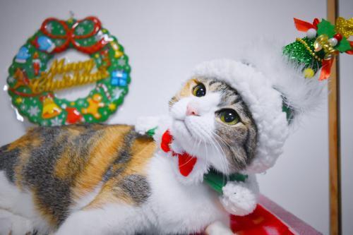 みくクリスマスツリー