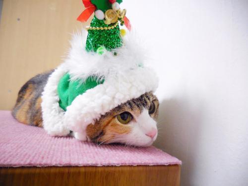 みくクリスマスツリー02