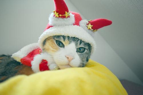 みく赤サンタ寝床