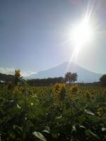 山中湖花の都公園2
