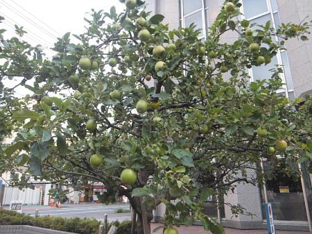 ニュートンの木2