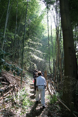 竹林の中へ