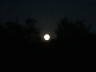 きれいなお月さま