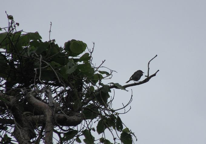 枝に鶯 28.6.5