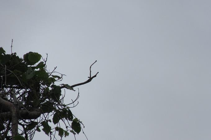 鶯が居た枝 28.6.5