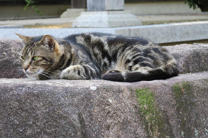 猫 円明院 28.6.26
