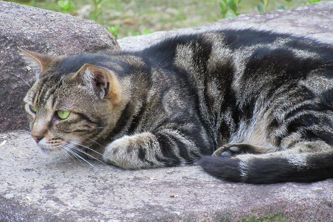 猫 円明院の庭 28.6.26