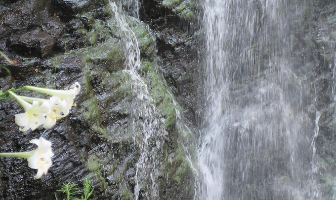 ユリの花と滝 28.8.12