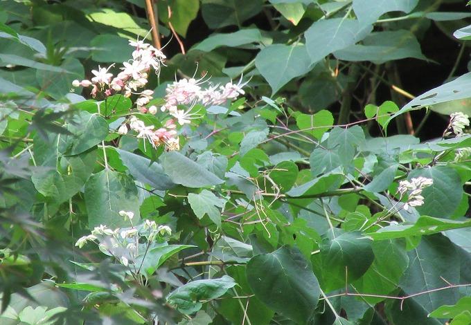 黒い蝶が居た花 28.8.13