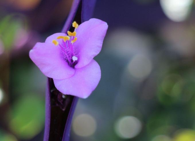 紫御殿 横 28.9.13