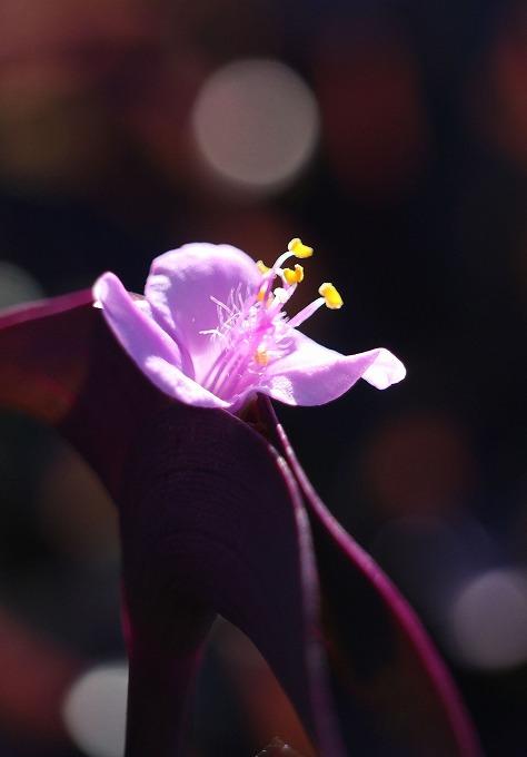 紫御殿 縦 28.9.13