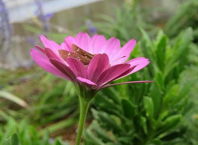 花と蝶 28.9.24