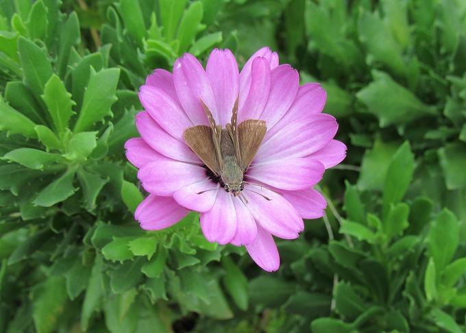 この花の中が好きな蝶 28.9.24