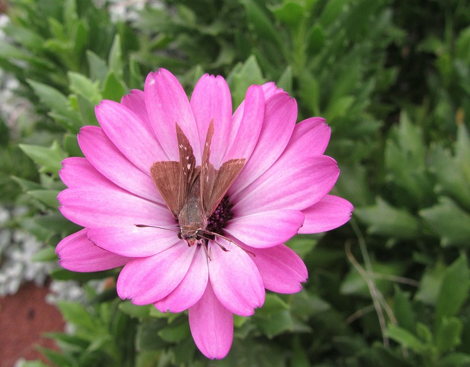 花の中に蝶 28.9.24
