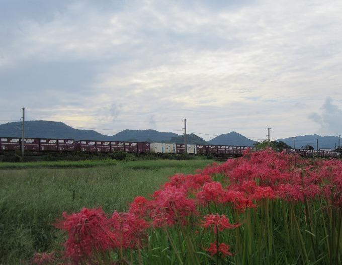彼岸花と桃太郎貨物列車 28.10.5