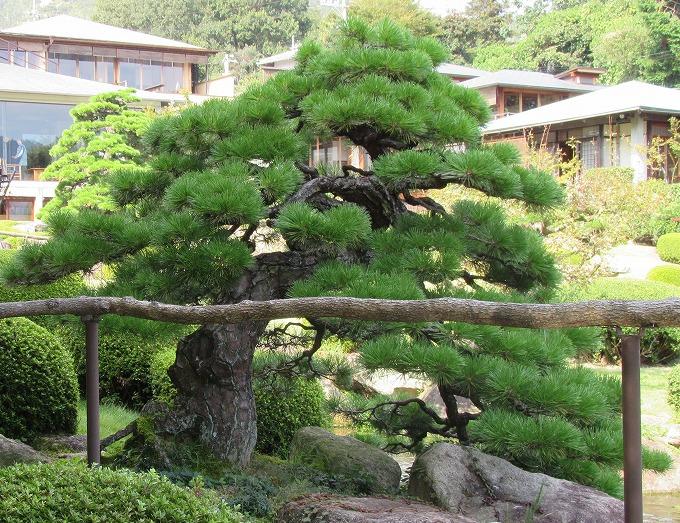 松 石亭の庭 28.10.25