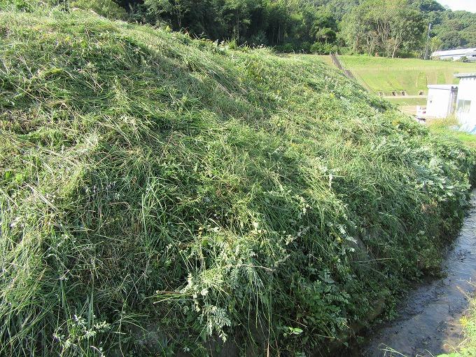 宗吉の池の土手 草刈り 28.10.30