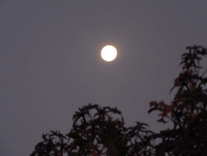 大きいお月様 明け方 28.11.16