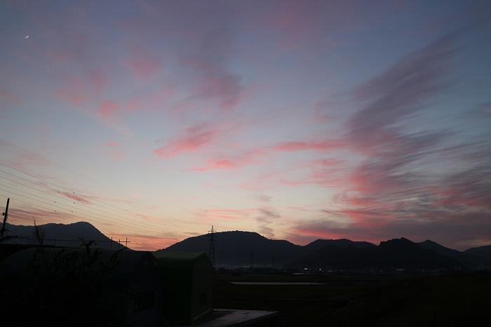 高瀬川土手から西を 28.12.3