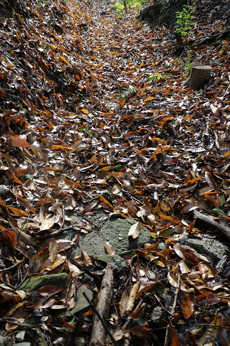 水は枯葉の下を流れているのかな 28.12.27