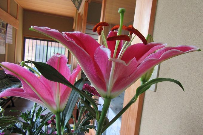 大師堂の花 28.7.20