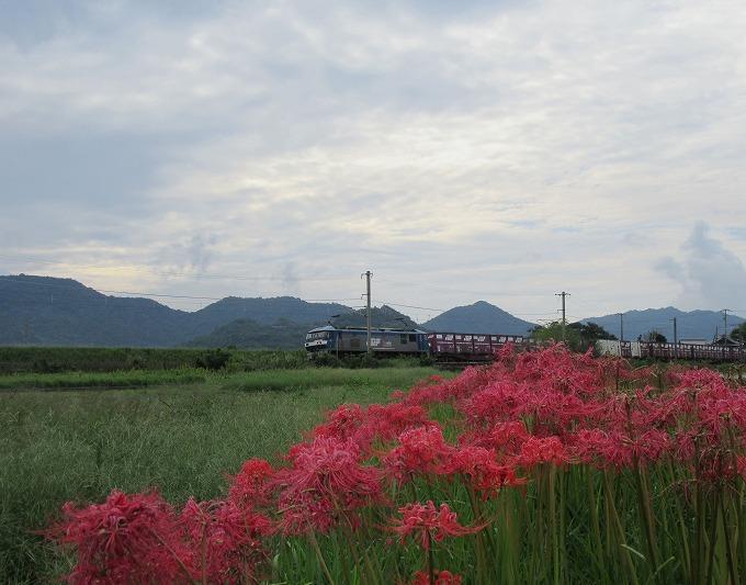 彼岸花と桃太郎貨車 28.10.5
