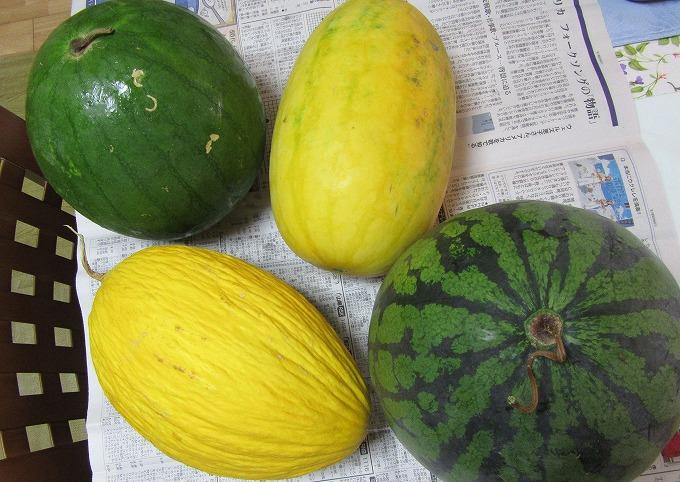 西瓜とメロンと 28.8.8