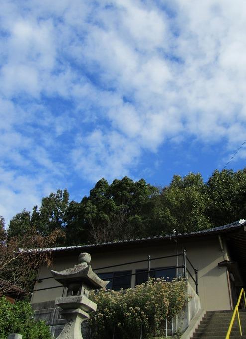 青空に藤袴 28.11.9