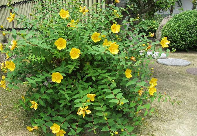 黄色い花  28.6.1