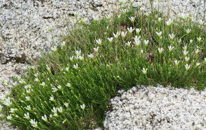 白い花 28 7 23