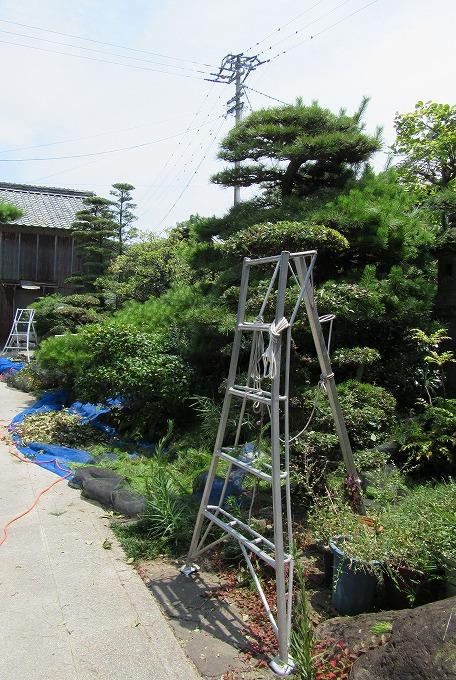 庭の剪定 昼休み 28.7.30