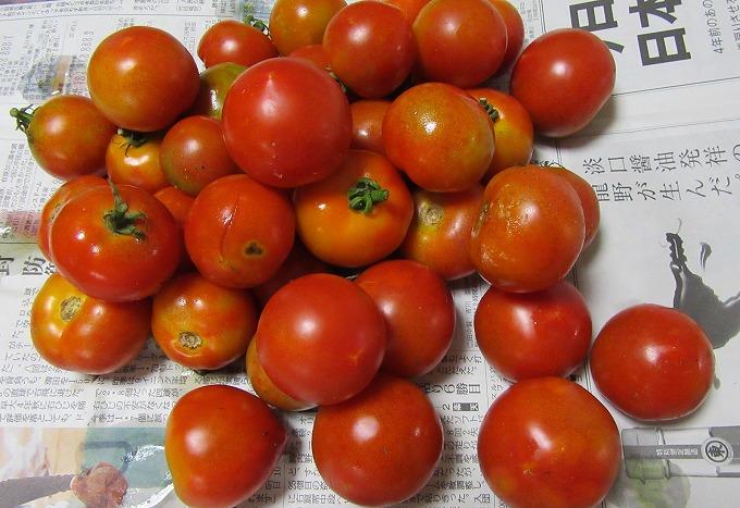 トマト 1 28.7.17