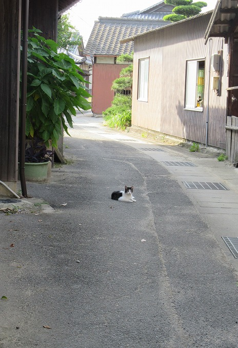少し近づいて猫 28.6.30