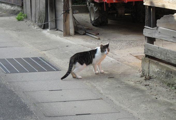 場所を移動する猫 28.6.30