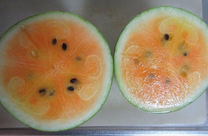 オレンジの西瓜 28.8.29