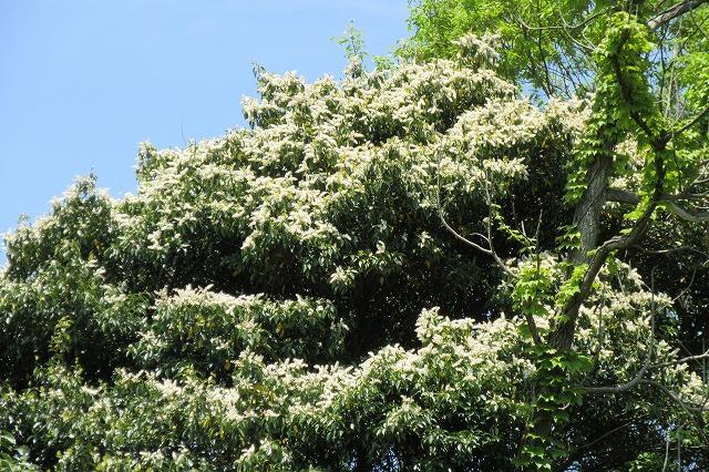頂上で白い花 28.4.26